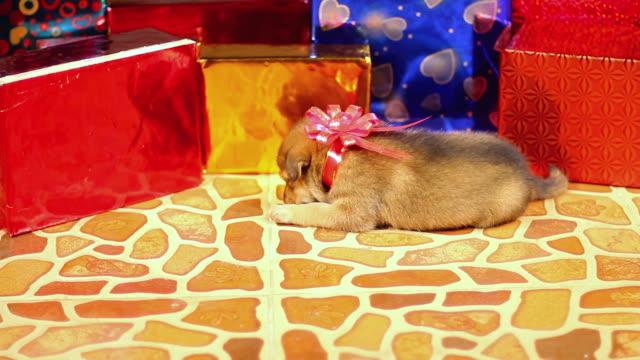 Puppy Christmas Sleeping video
