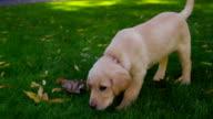 Puppy in grass video