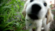 Puppy playing. Slow motion video
