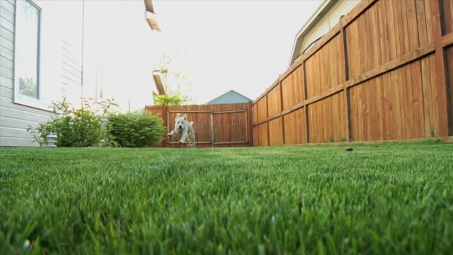 puppy running toward camera 2 video