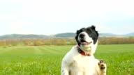Puppy scratching - season of ticks! video