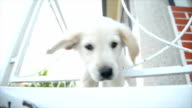 Puppy. Slow motion video