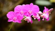 Purple orchids video