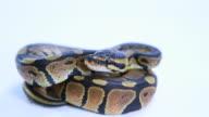 Python video
