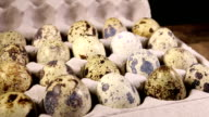 Quail eggs. video