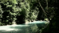 Quiet river flowing in the forest video