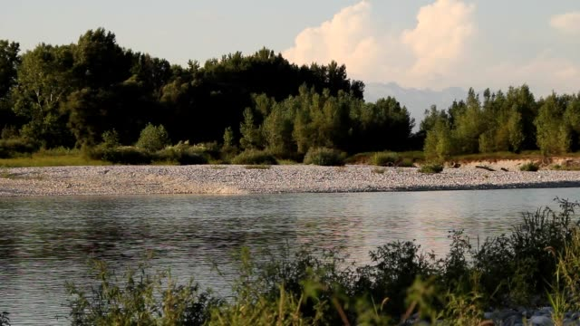 Quiet river with vegetation video