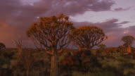 Quiver Tree Forest video