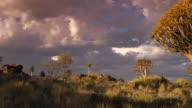 Quiver Tree video