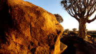 TIME LAPSE: Quiver Trees in Namibia video