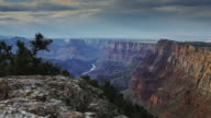 Quivering Plants on Grand Canyon Edge video