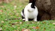 Rabbit crouching stare video