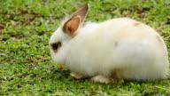 Rabbit eats carrot video