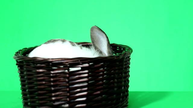 rabbit in a wicker basket video