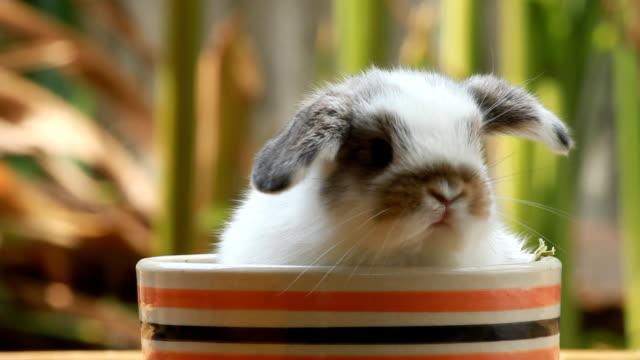 Rabbit in pot video