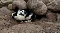 Rabbit near to the cave video