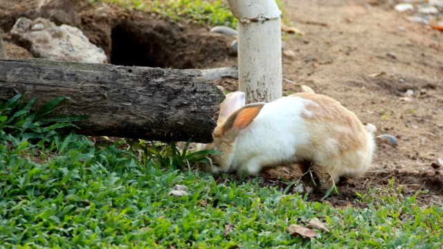 Rabbit runs in a garden. video