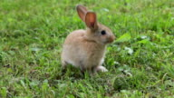 Rabbit sitting on the grass video