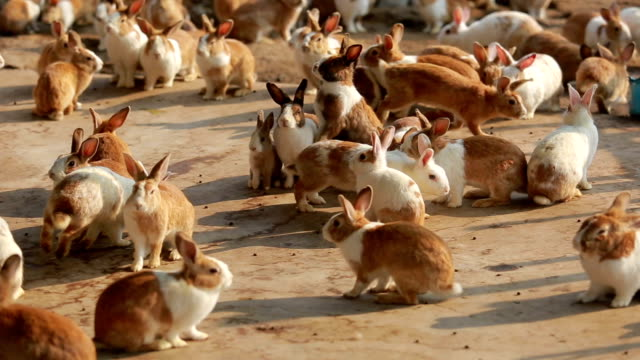Rabbit standing up and running on the farm video
