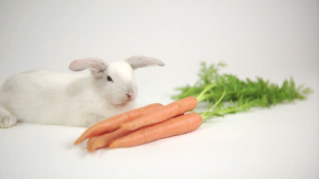 Rabbit with carrots video