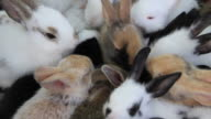 Rabbits eating food. video