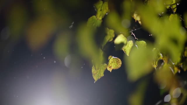 rain and snow falls on the background of autumn leaves video