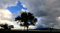 Rain clouds and tree video