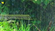 Rain drop video