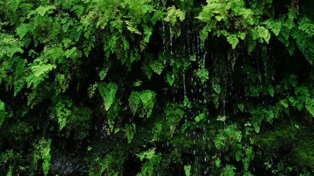 Rain drops falling off of lush green ferns in the jungle video
