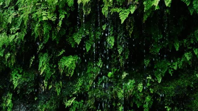 Rain drops falling off of lush green ferns in the jungle video