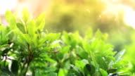 rain drops in lights on green leaf video
