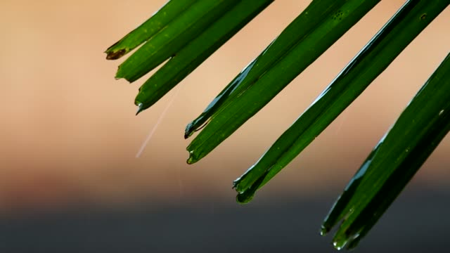 rain fall on the green leaf video