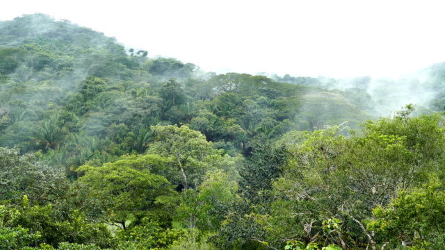 Rain falling on mountain covered in dense jungle with slow moving fog video