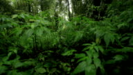Rain forest, dolly shot. video
