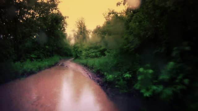 Rain forest. video