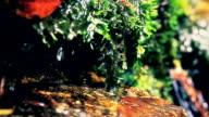 Rain forest video