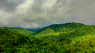Rain forest with mountain mist video