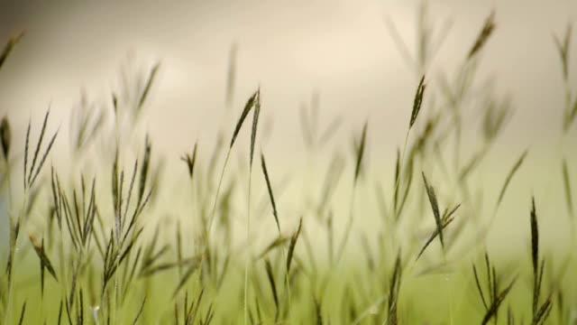 Rain garden. video