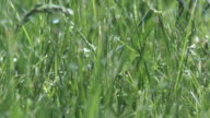 Rain Grass 24_03 video