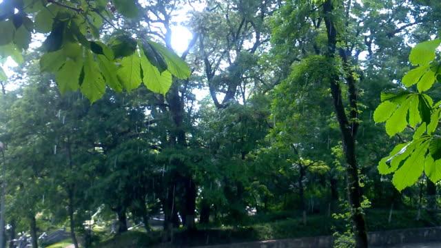 rain in the summer park video