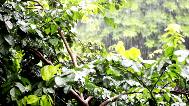 Rain in tropical forest video