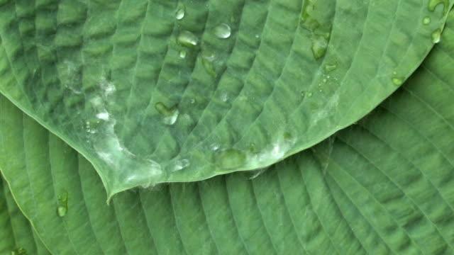 Rain on Leaves 4 video