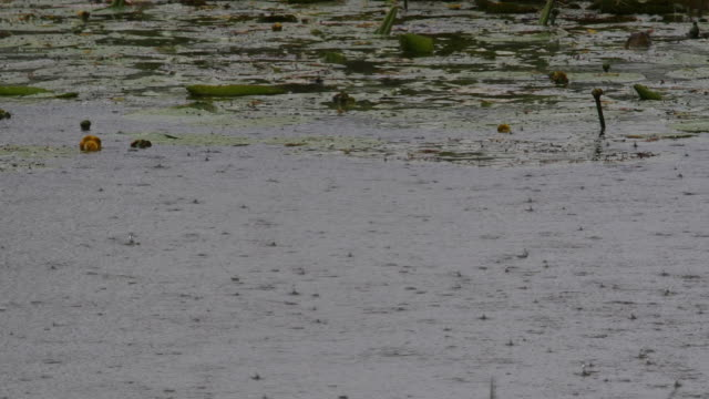 Rain on Pond, Normandy in France, Real Time 4K video