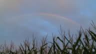 HD: Rainbow Over The Corn Field video