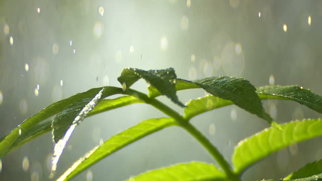 Raindrops Falling On Young Plant Close-up video