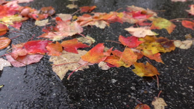 MACRO: Raindrops falling onto colorful leaves laying on road in rainy autumn day video