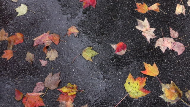 TOP DOWN Raindrops falling onto colorful leaves laying on road in rainy autumn video