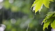 Rainfall video