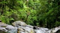 Rainforest Falls video