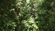 Rainforest HD video